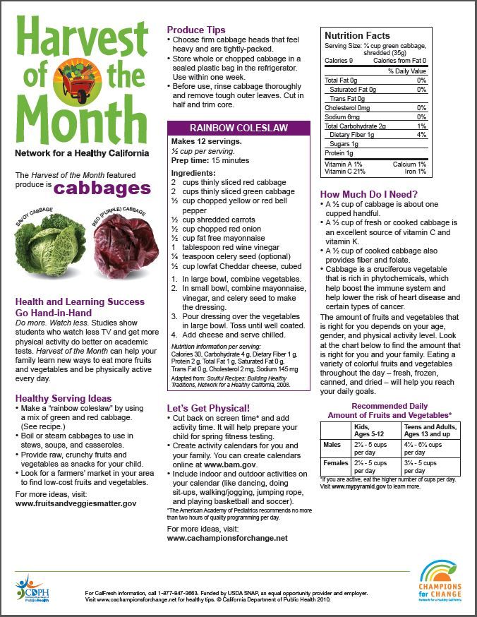 Harvest of the Month: Cabbage
